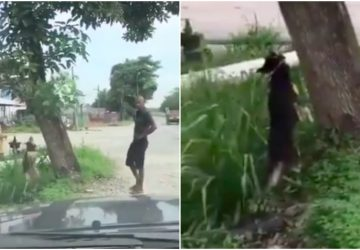 (Video inside) Police confirms man who hung dog from tree has mental problems
