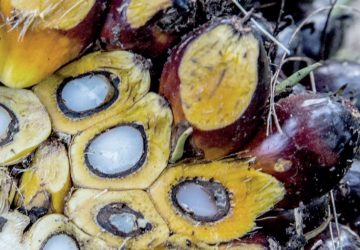 India to resume import of Malaysian palm oil