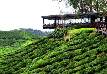 Cameron Highlands 'heats up' with droves of visitors